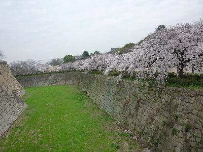大阪城の桜6
