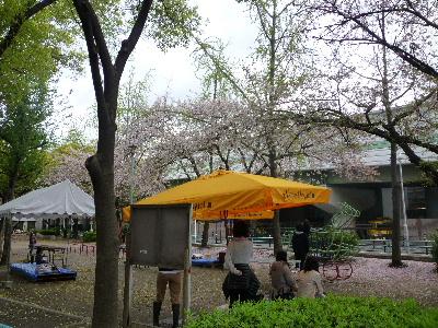 福島公園の桜1