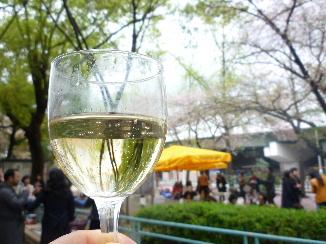 福島公園の桜2