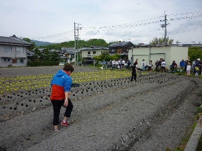 夏野菜苗植え1