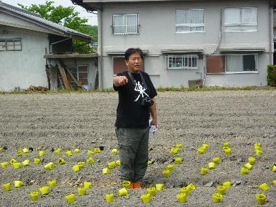 夏野菜苗植え5