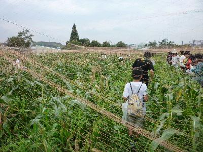 7月収穫1