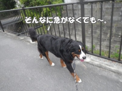RIMG2198.jpg