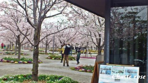 la place des cerisiers