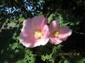 このハナ、何の花?
