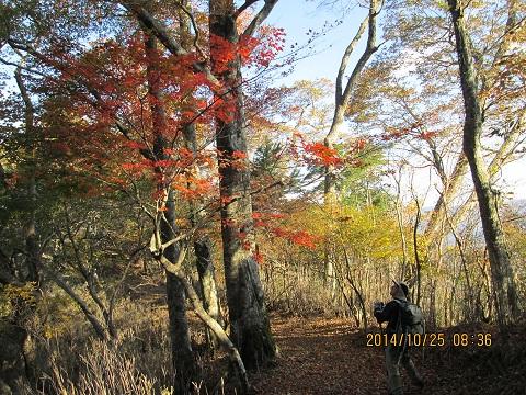 雷坂尾根道の紅葉