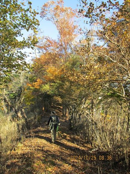 紅葉と尾根道