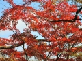 雷坂の紅葉