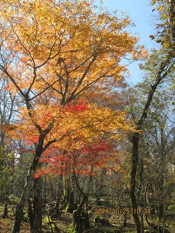 杉ノ木谷分岐付近の紅葉