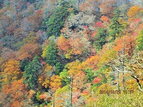 樅木登山口方面の尾根紅葉