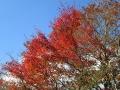 五勇山手前の紅葉