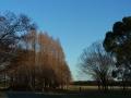 2014正月・水元公園5