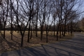 2014正月・水元公園8
