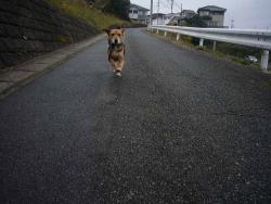 散歩20131127-1
