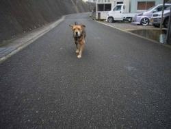 散歩20131127-2