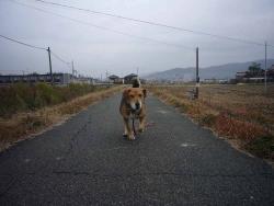 散歩20131127-4