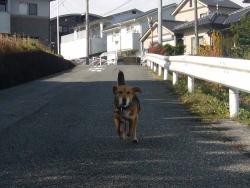 散歩20131128-3