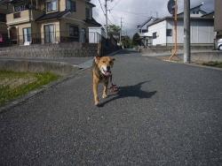 散歩20131128-4