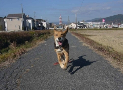 散歩20131130-4