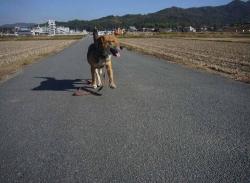 散歩20131130-5