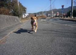 散歩20131130-6