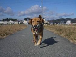 散歩20131129-4