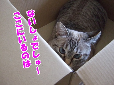 DSC5124.jpg