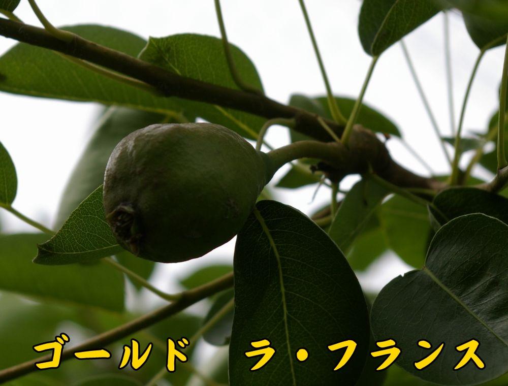 1Gfrance0519c1.jpg
