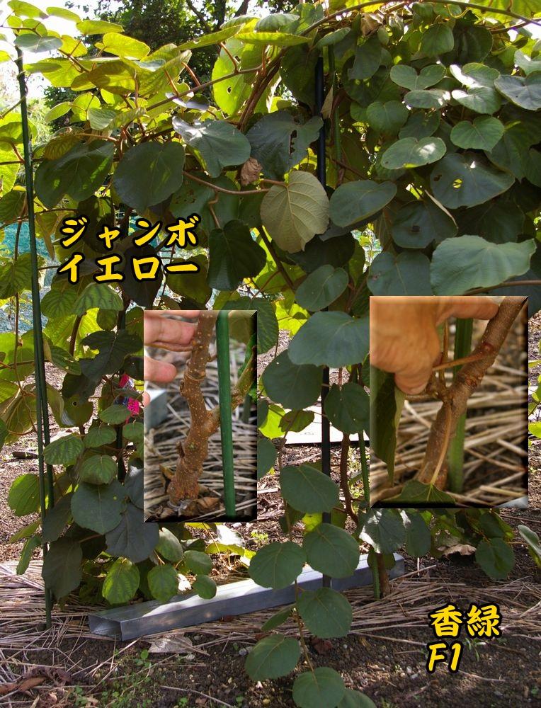 1J_KF1008c1.jpg