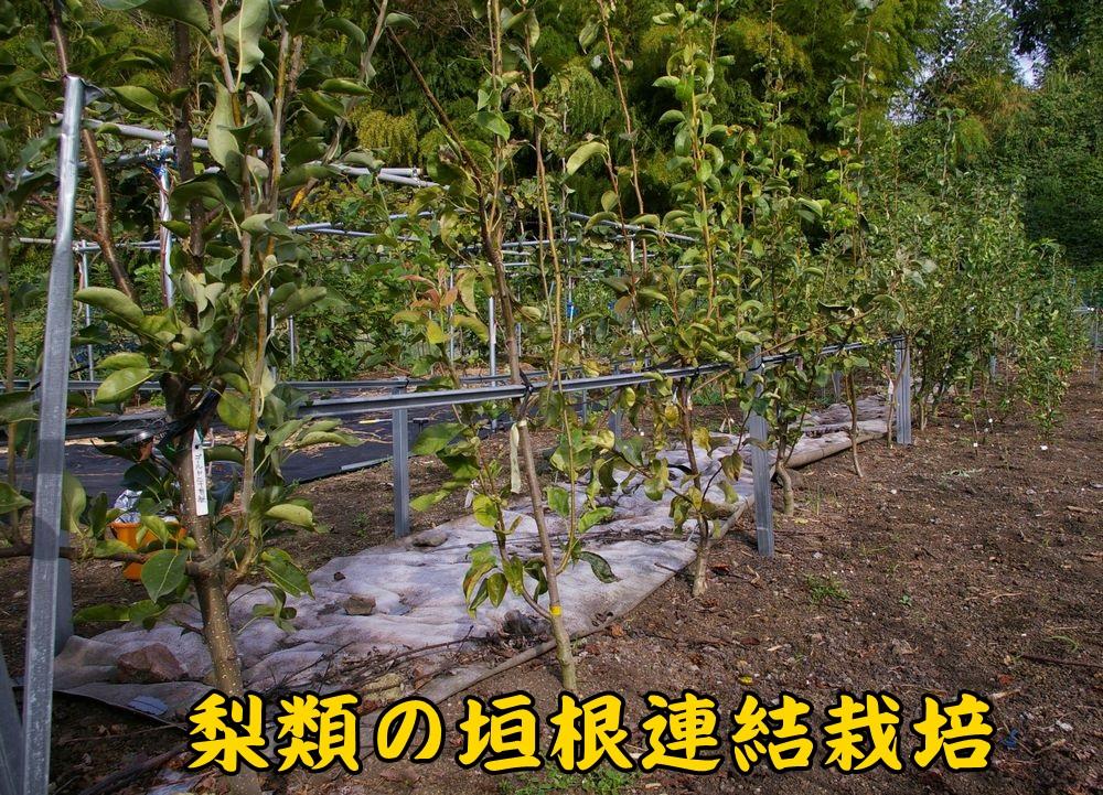 1N_Jo1008c1.jpg