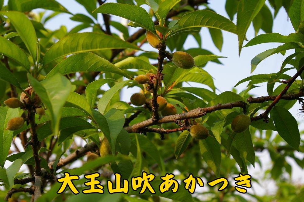 1OYakatuki0430c1.jpg