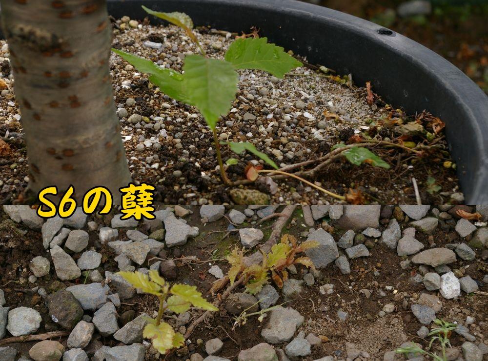 1S6hiko0510c1.jpg