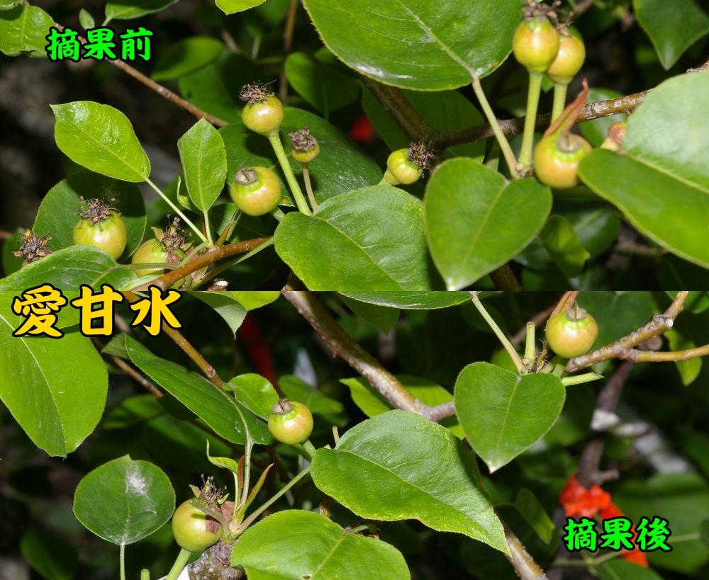 1aikansui0422c1.jpg