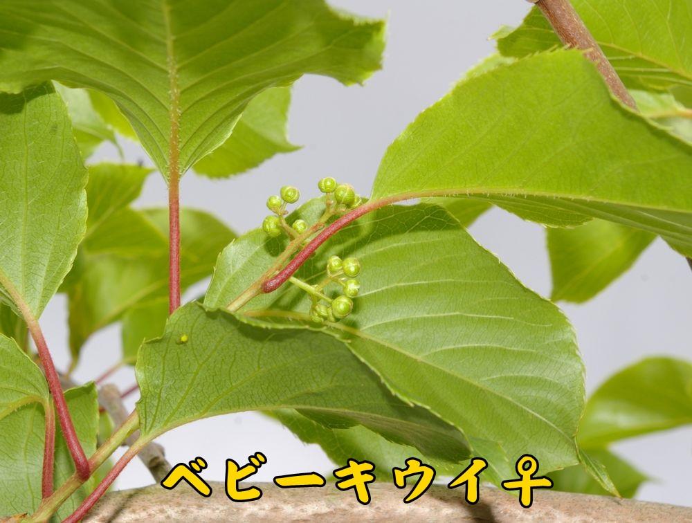 1baby0419c1.jpg