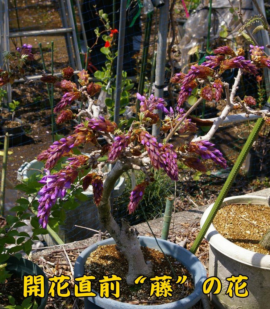 1fuji0404c1.jpg