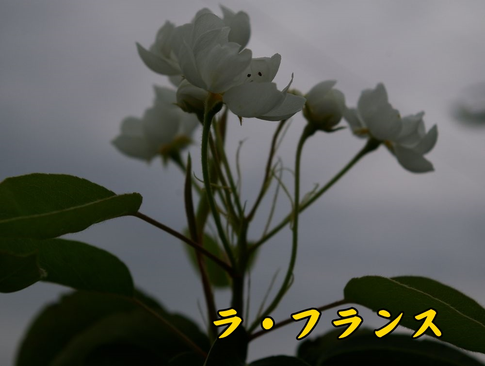 1furan1015c1.jpg