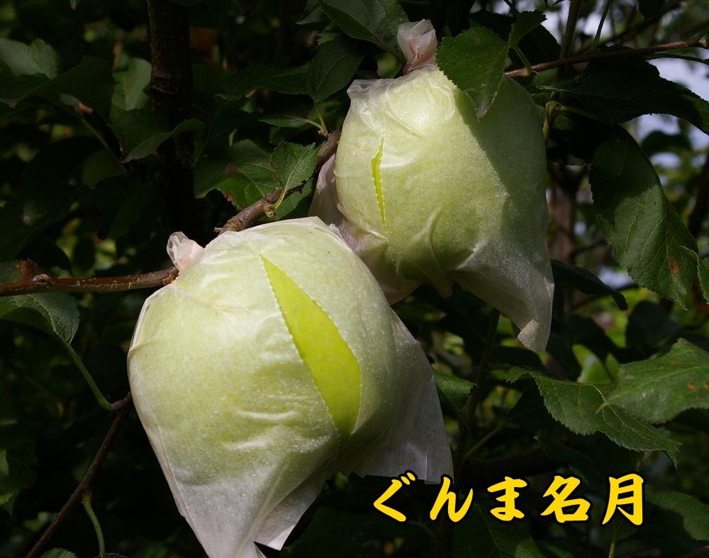1gunma0914c1.jpg