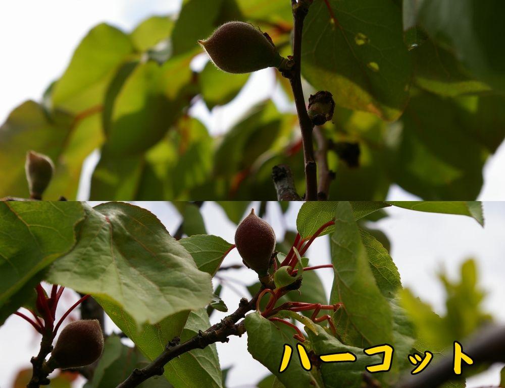 1harcot0425c1.jpg