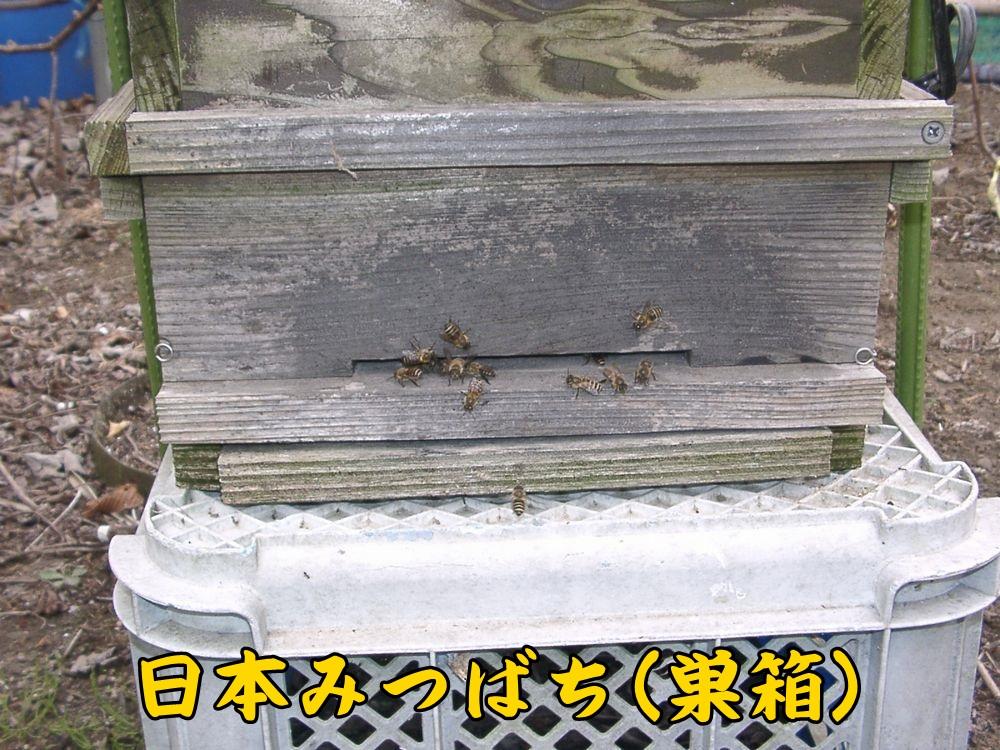 1hati0417c2.jpg