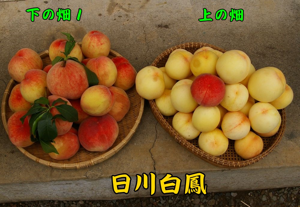 1hikawa0701c4.jpg