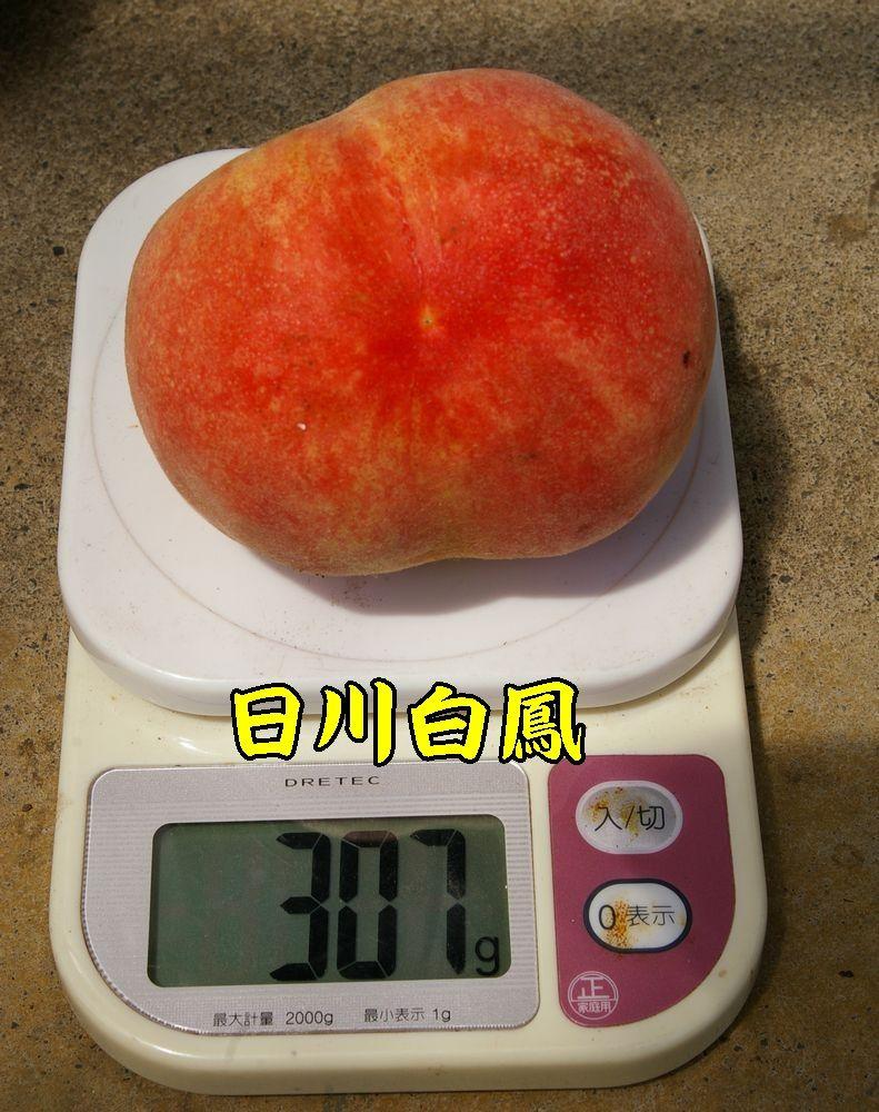 1hikawa0706c1.jpg