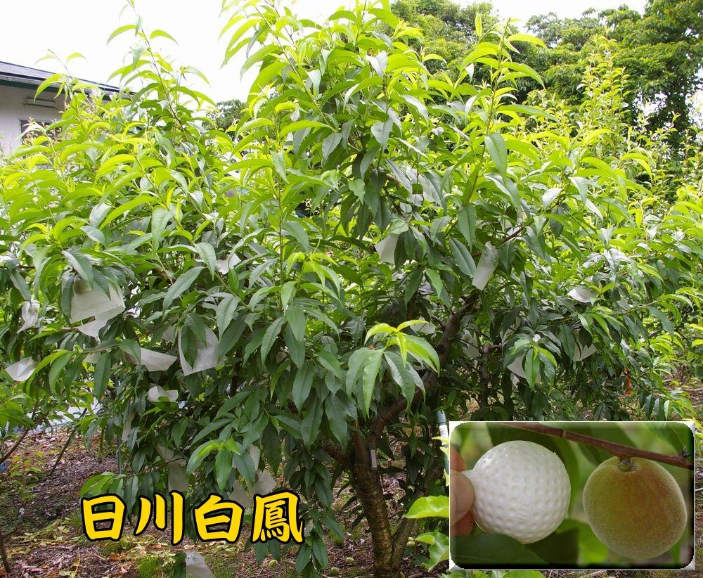 1hikawahaku0522c2.jpg