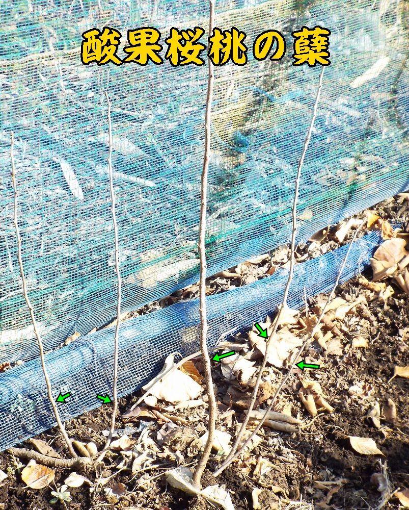 1hikobae0112c1.jpg