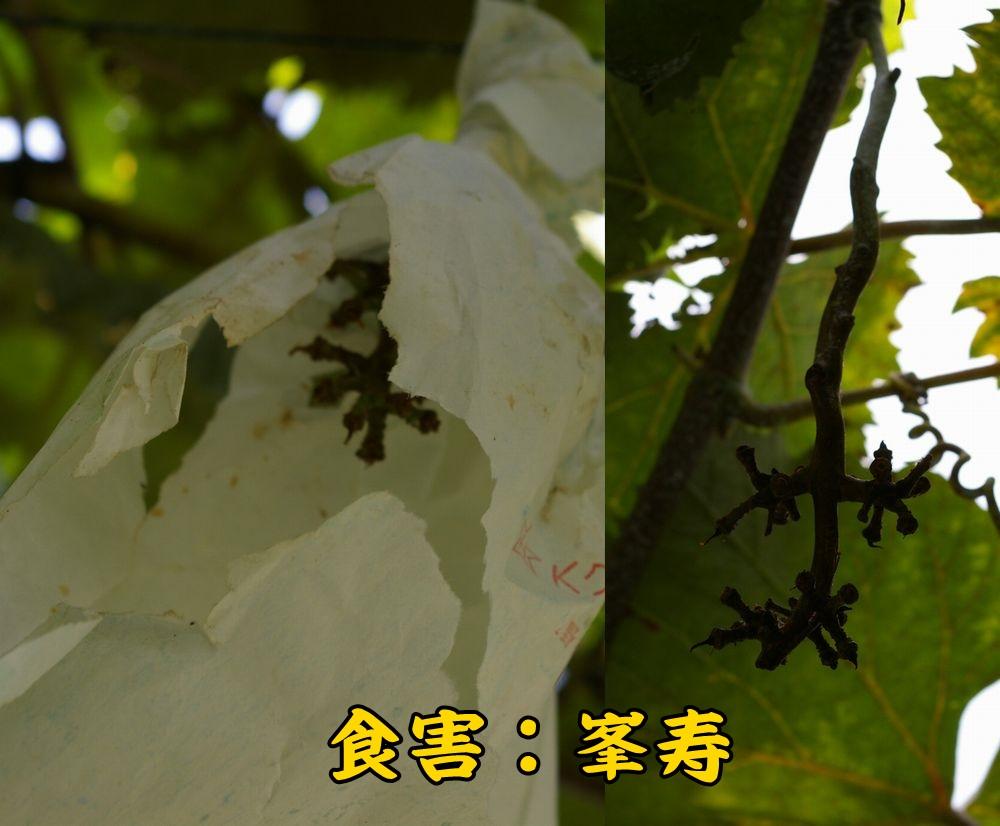 1hojyu0812c1.jpg