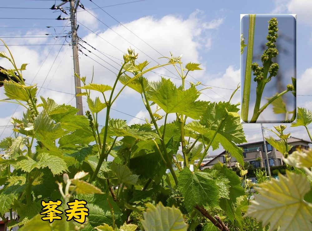 1houjyu0426c1.jpg