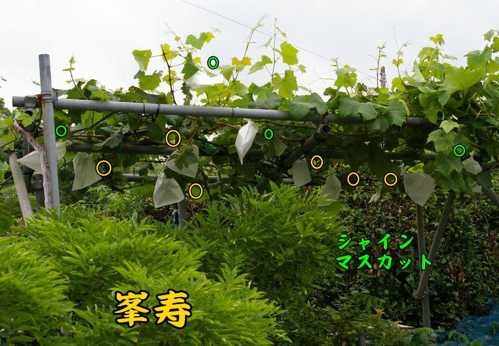 1houjyu0610c1.jpg