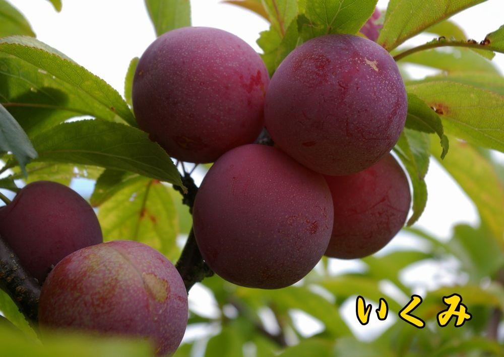 1ikumi0614c1.jpg