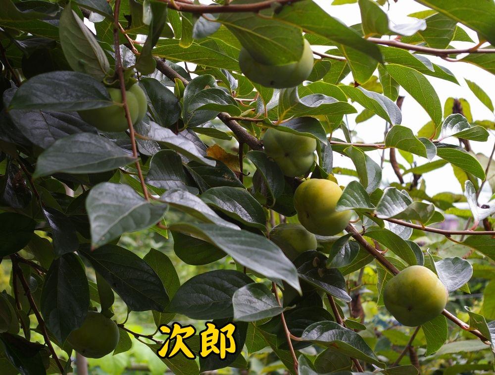 1jiro0914c1.jpg