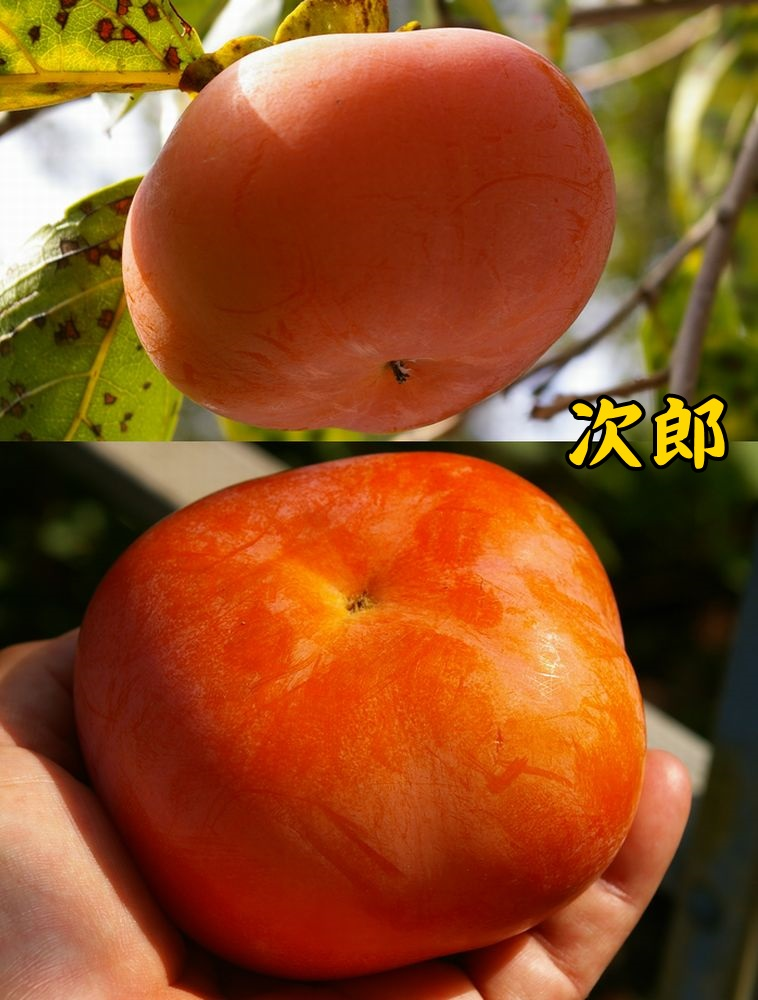 1jiro1014c2.jpg