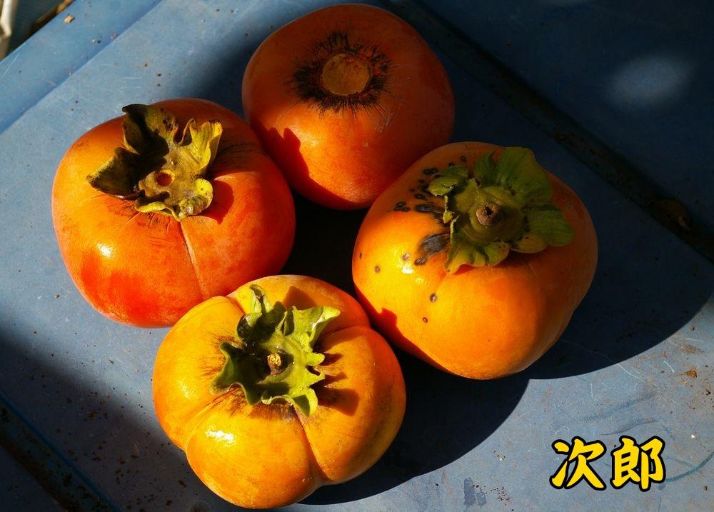 1jiro1014c3.jpg